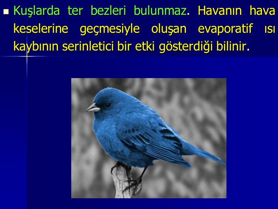 Kuşlarda ter bezleri bulunmaz