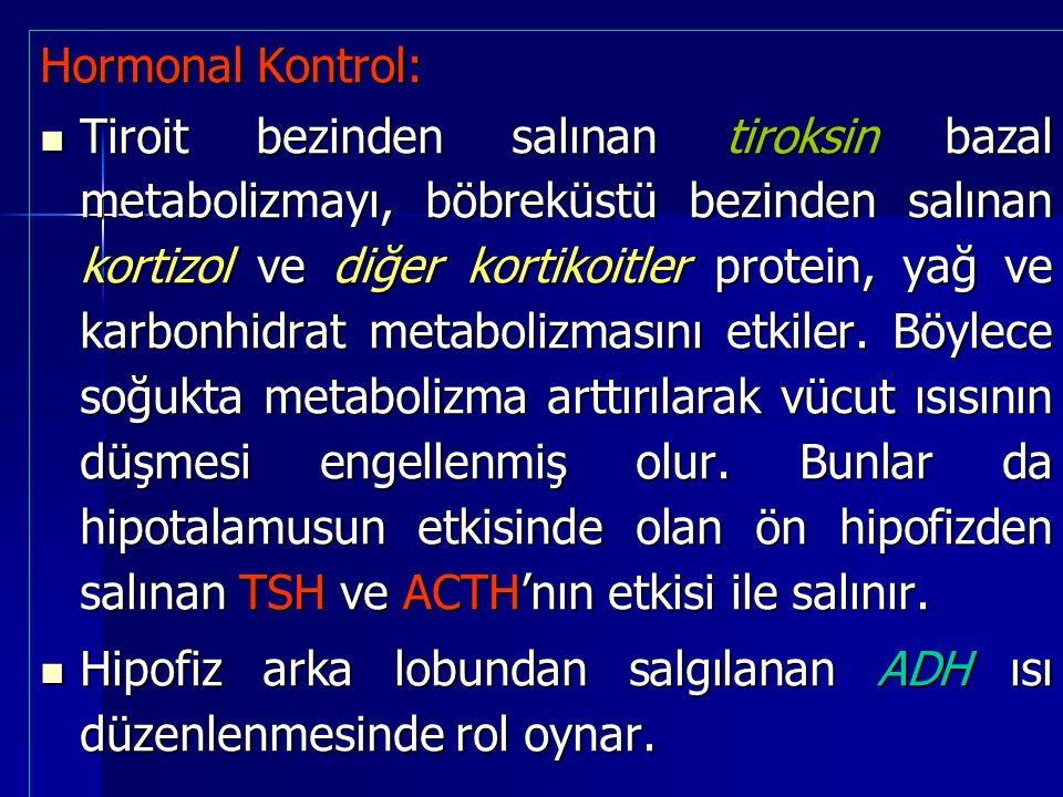 Hormonal Kontrol: