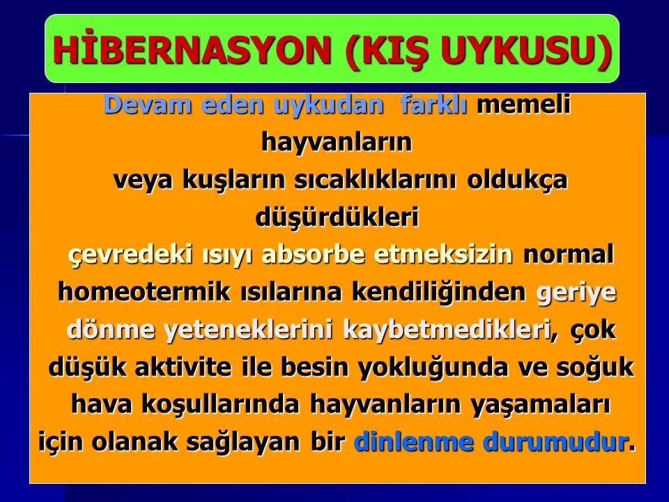 HİBERNASYON (KIŞ UYKUSU)