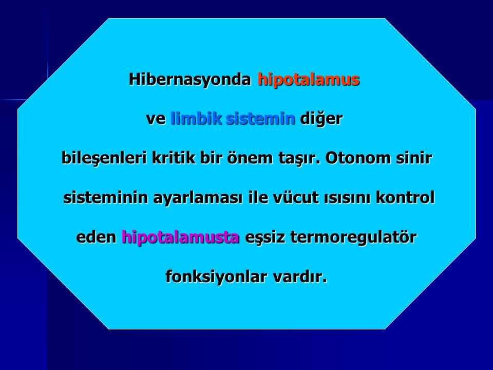 Hibernasyonda hipotalamus ve limbik sistemin diğer