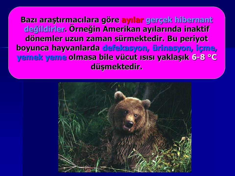 Bazı araştırmacılara göre ayılar gerçek hibernant değildirler