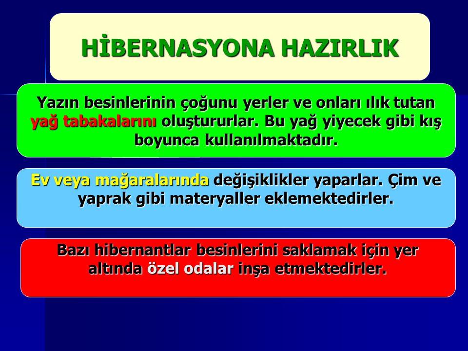 HİBERNASYONA HAZIRLIK