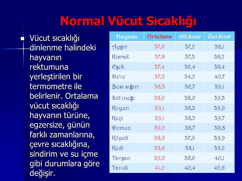 Normal Vücut Sıcaklığı