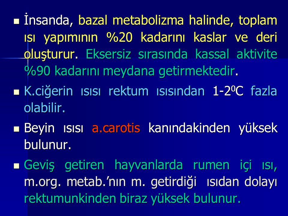 İnsanda, bazal metabolizma halinde, toplam ısı yapımının %20 kadarını kaslar ve deri oluşturur. Eksersiz sırasında kassal aktivite %90 kadarını meydana getirmektedir.