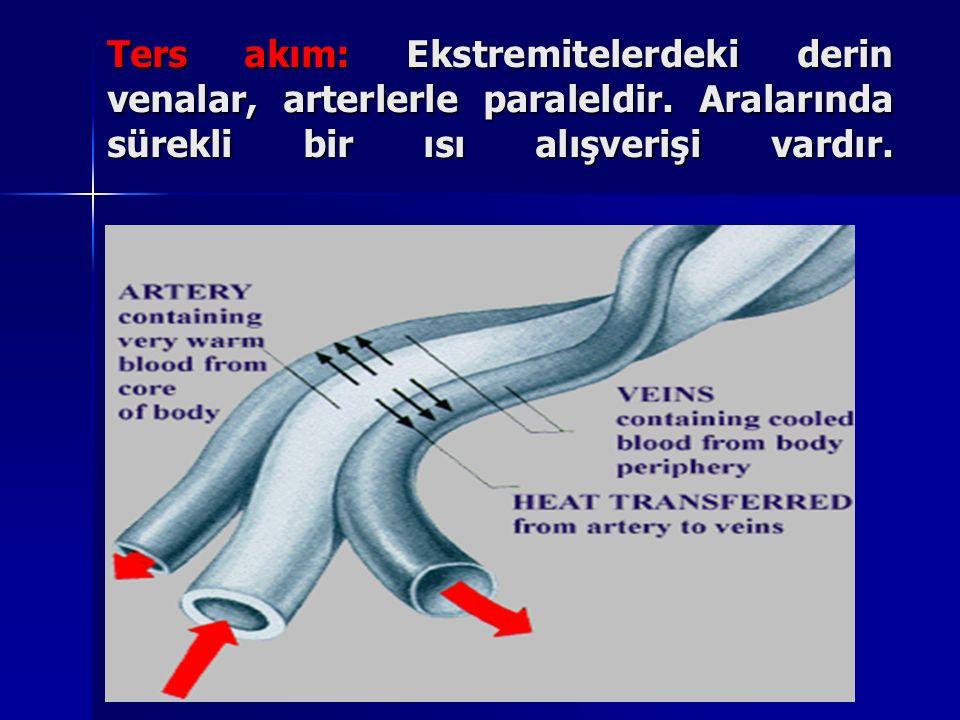 Ters akım: Ekstremitelerdeki derin venalar, arterlerle paraleldir