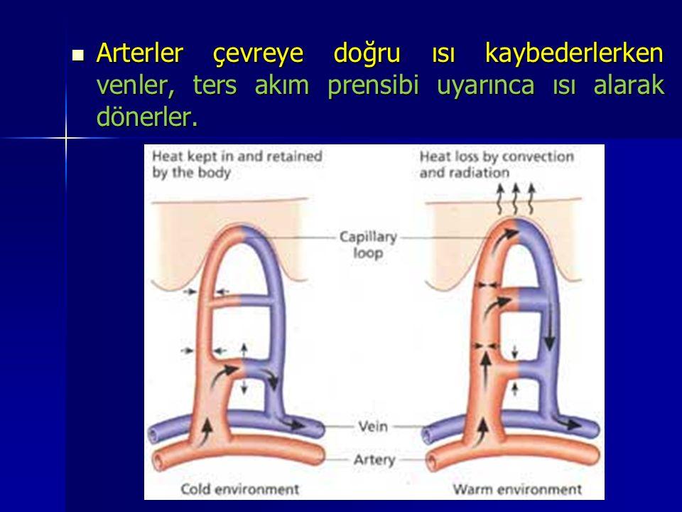 Arterler çevreye doğru ısı kaybederlerken venler, ters akım prensibi uyarınca ısı alarak dönerler.