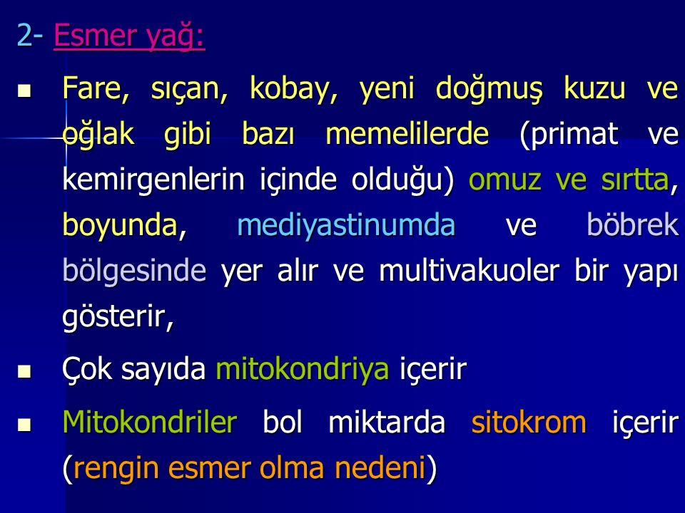 2- Esmer yağ: