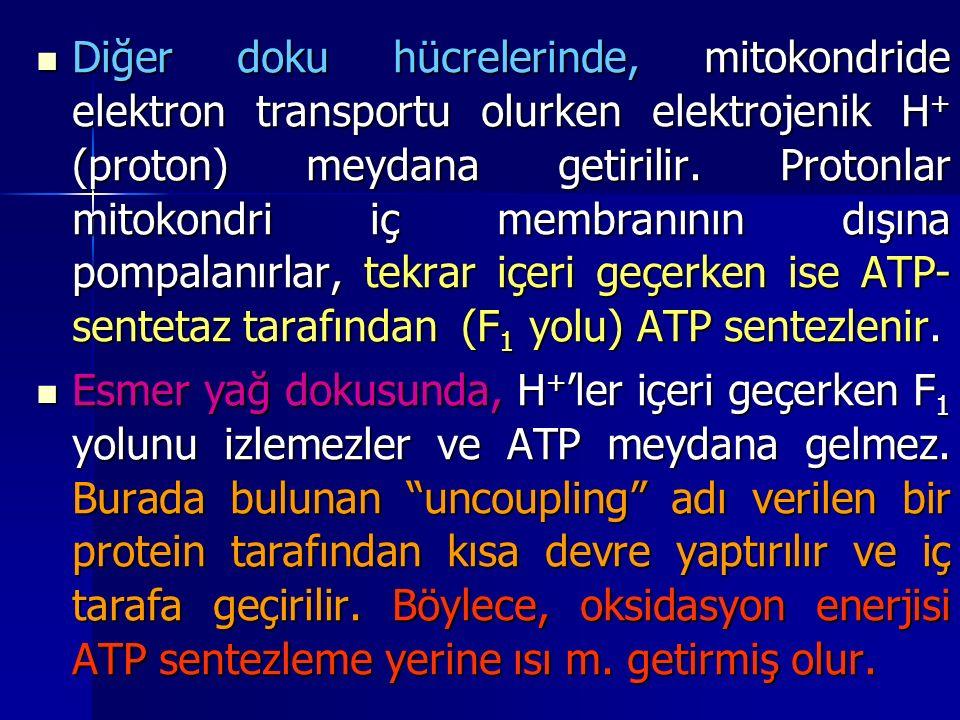 Diğer doku hücrelerinde, mitokondride elektron transportu olurken elektrojenik H+ (proton) meydana getirilir. Protonlar mitokondri iç membranının dışına pompalanırlar, tekrar içeri geçerken ise ATP-sentetaz tarafından (F1 yolu) ATP sentezlenir.