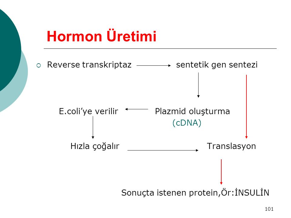 Hormon Üretimi Reverse transkriptaz sentetik gen sentezi
