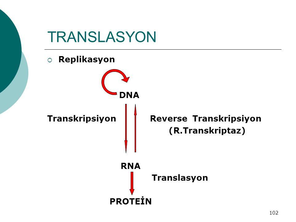 TRANSLASYON Replikasyon DNA Transkripsiyon Reverse Transkripsiyon