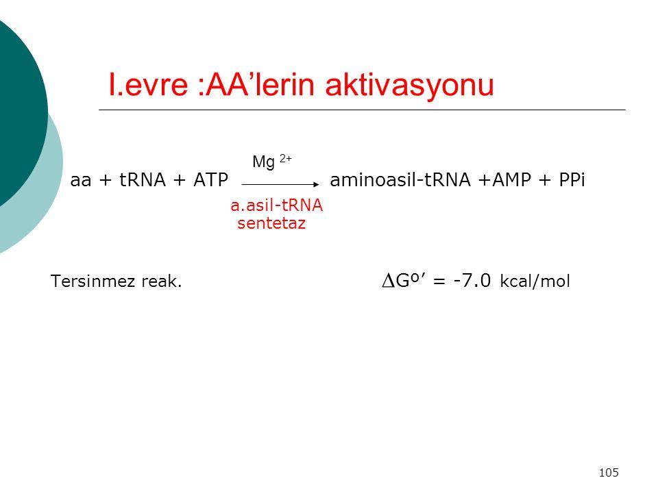 I.evre :AA'lerin aktivasyonu