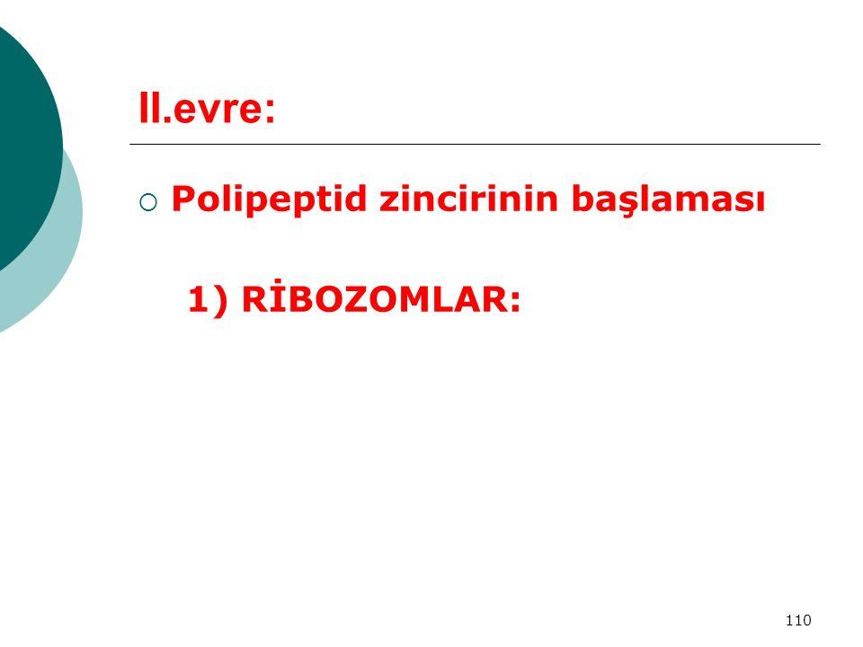 II.evre: Polipeptid zincirinin başlaması 1) RİBOZOMLAR: