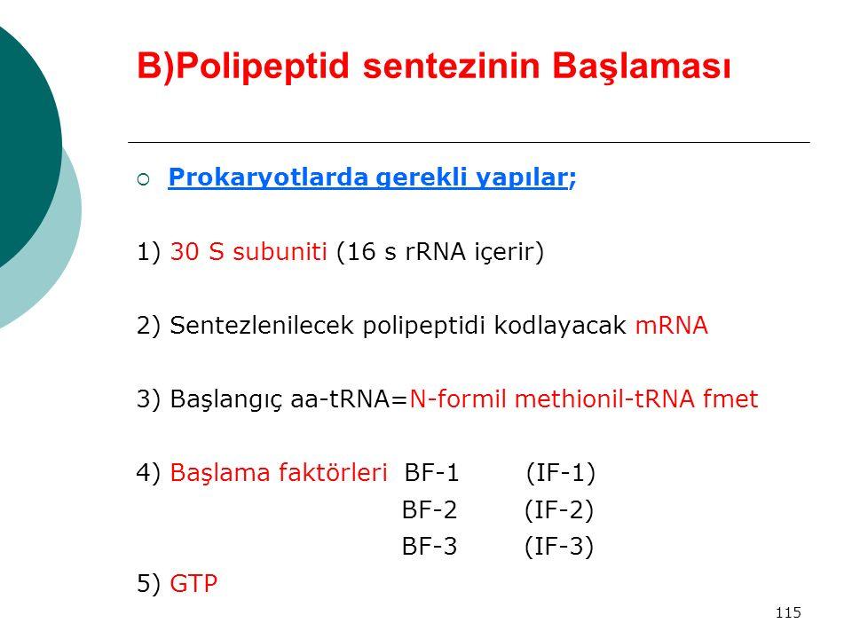 B)Polipeptid sentezinin Başlaması