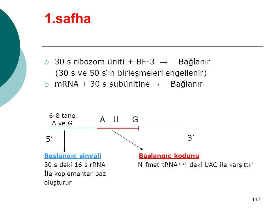 1.safha 30 s ribozom üniti + BF-3 → Bağlanır