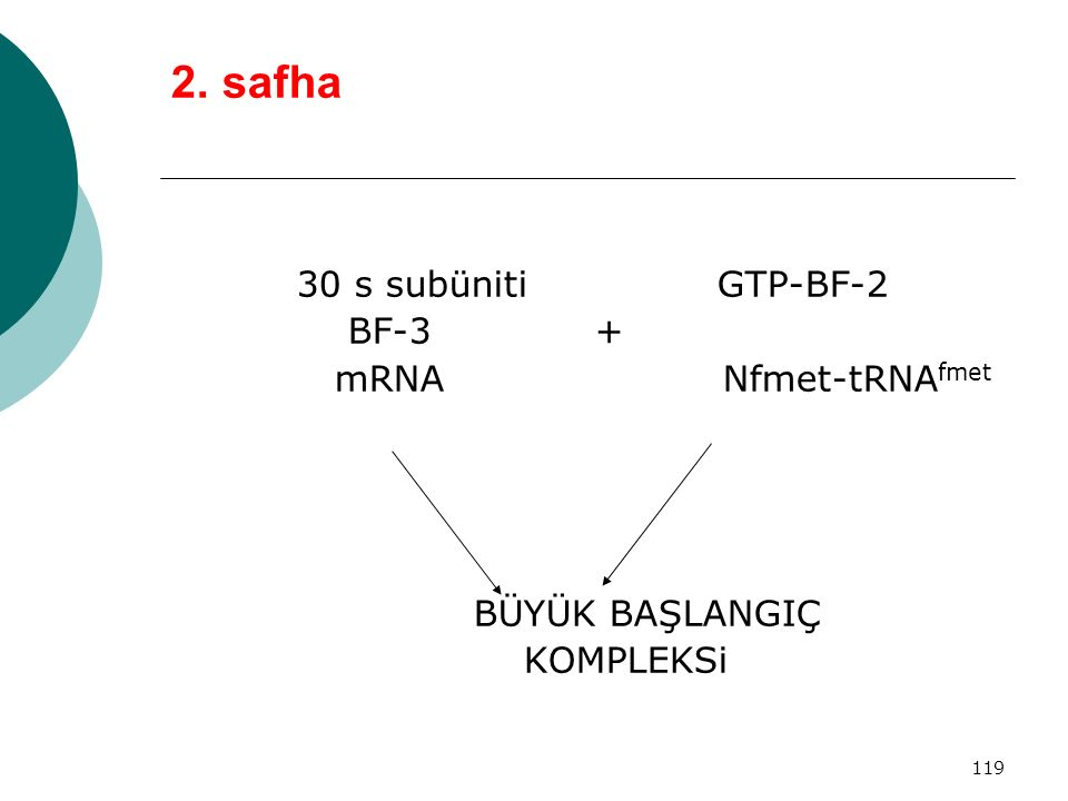 2. safha 30 s subüniti GTP-BF-2 BF-3 + mRNA Nfmet-tRNAfmet