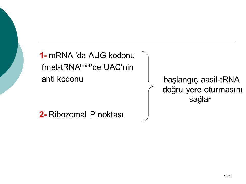 1- mRNA 'da AUG kodonu fmet-tRNAfmet'de UAC'nin. anti kodonu. 2- Ribozomal P noktası. başlangıç aasil-tRNA.