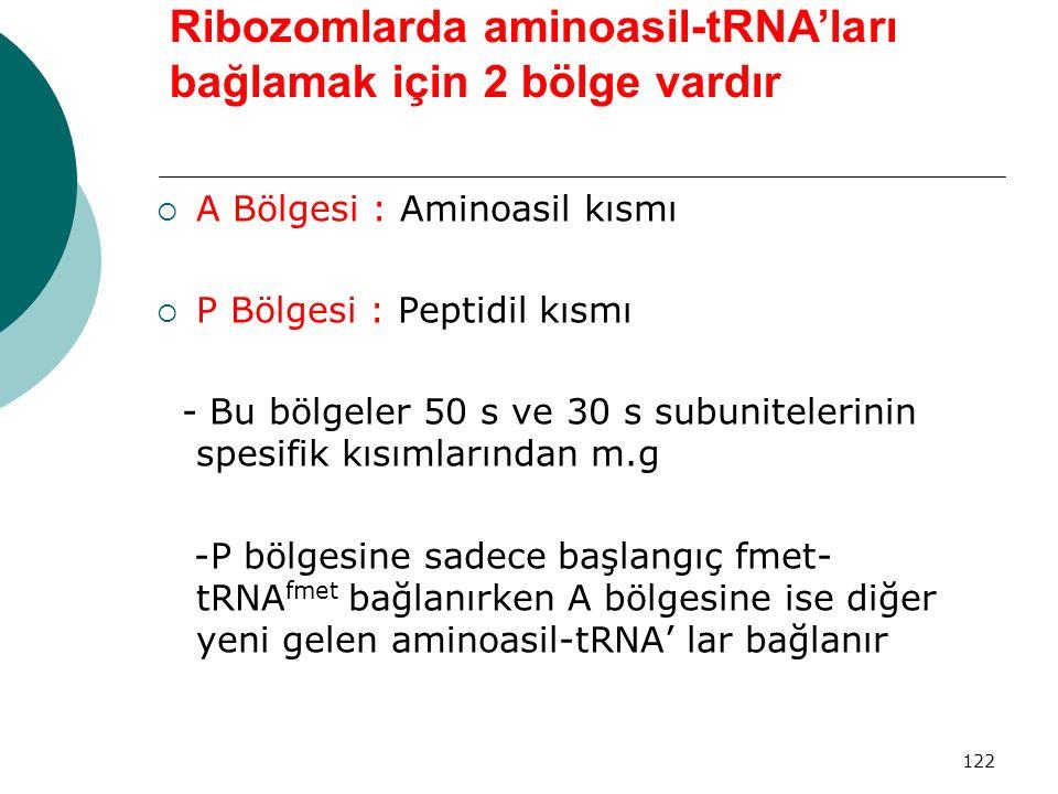 Ribozomlarda aminoasil-tRNA'ları bağlamak için 2 bölge vardır