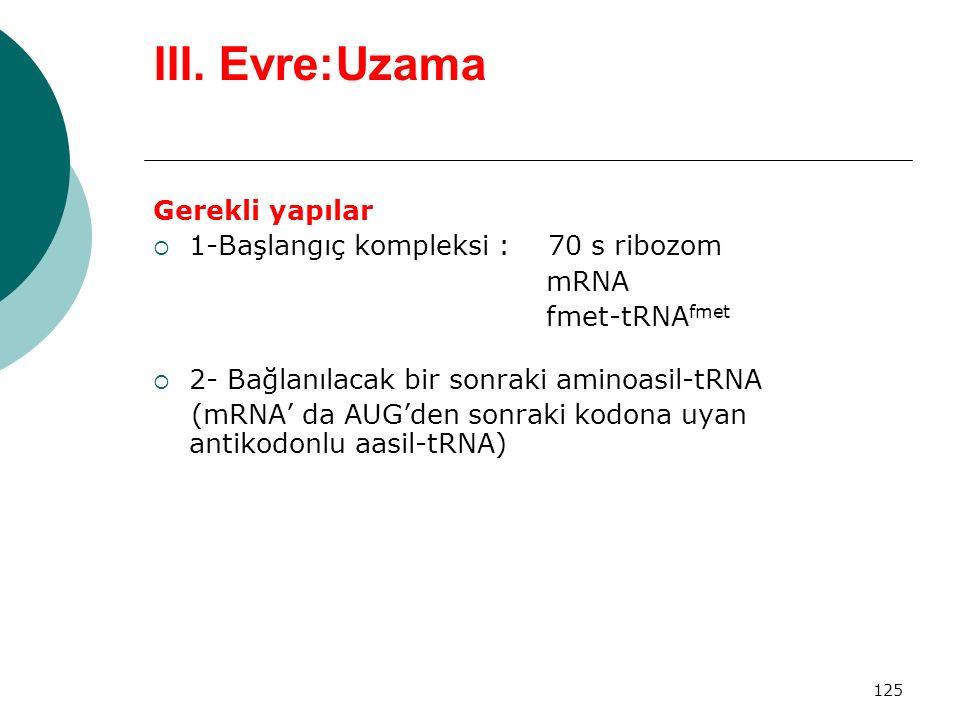 III. Evre:Uzama Gerekli yapılar 1-Başlangıç kompleksi : 70 s ribozom