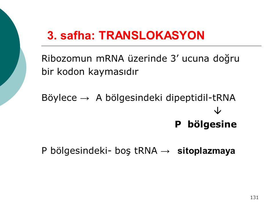 3. safha: TRANSLOKASYON Ribozomun mRNA üzerinde 3' ucuna doğru