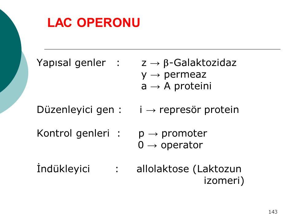 LAC OPERONU Yapısal genler : z → -Galaktozidaz y → permeaz