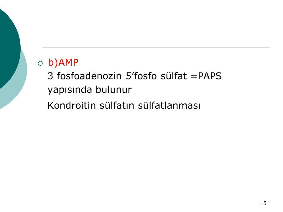 b)AMP 3 fosfoadenozin 5'fosfo sülfat =PAPS yapısında bulunur Kondroitin sülfatın sülfatlanması