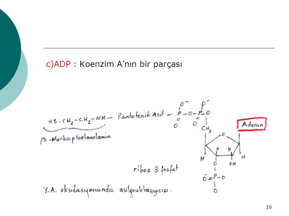c)ADP : Koenzim A'nın bir parçası
