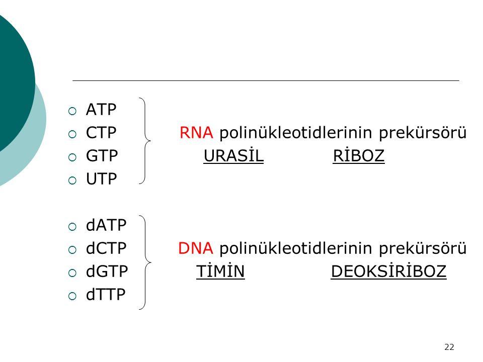 ATP CTP RNA polinükleotidlerinin prekürsörü. GTP URASİL RİBOZ. UTP.