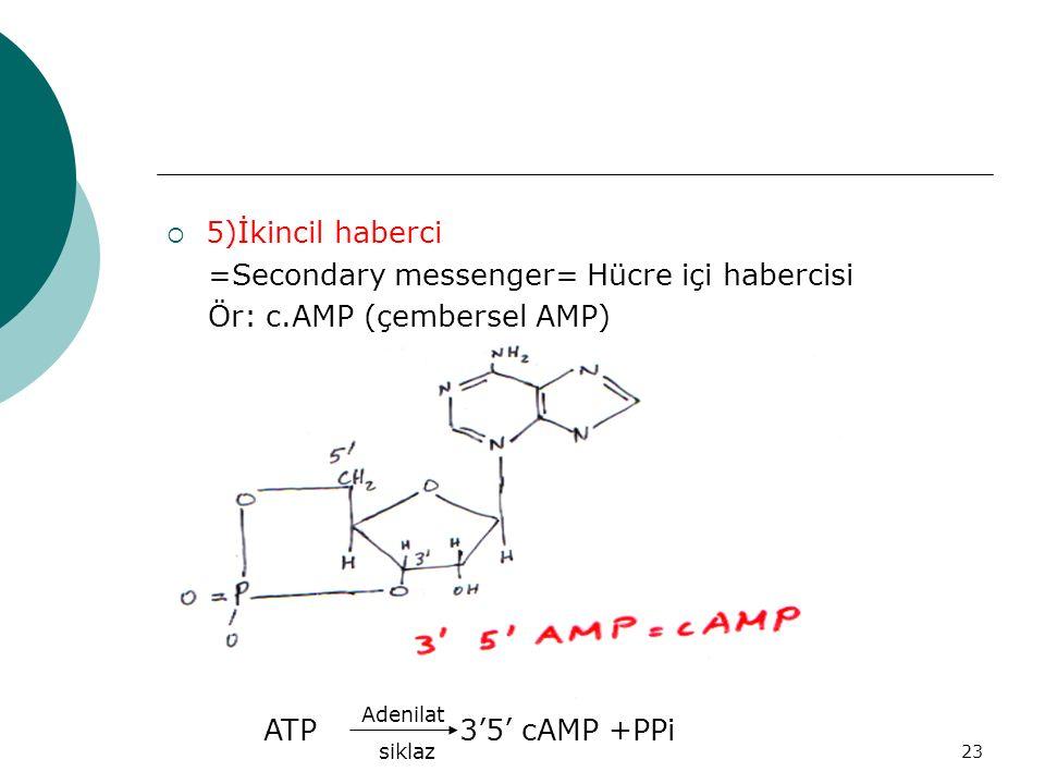 =Secondary messenger= Hücre içi habercisi Ör: c.AMP (çembersel AMP)