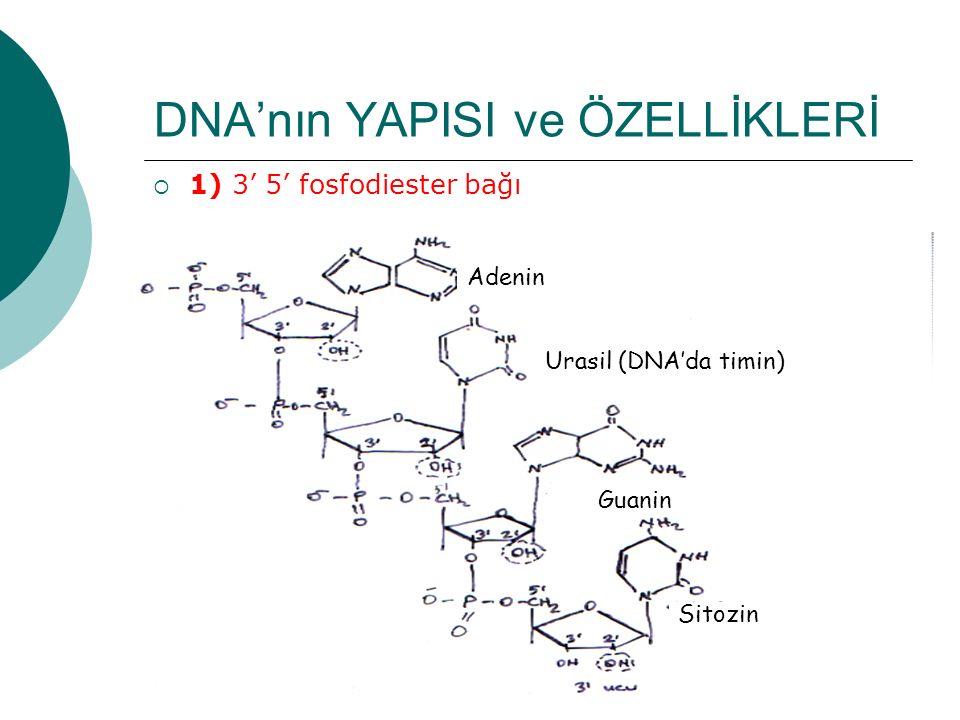DNA'nın YAPISI ve ÖZELLİKLERİ
