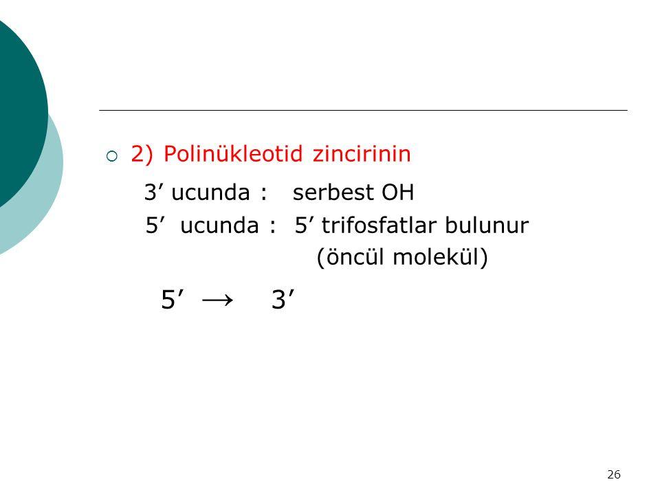 3' ucunda : serbest OH 2) Polinükleotid zincirinin