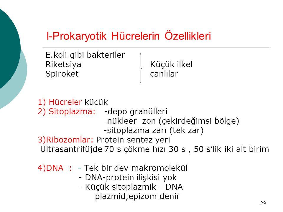 I-Prokaryotik Hücrelerin Özellikleri