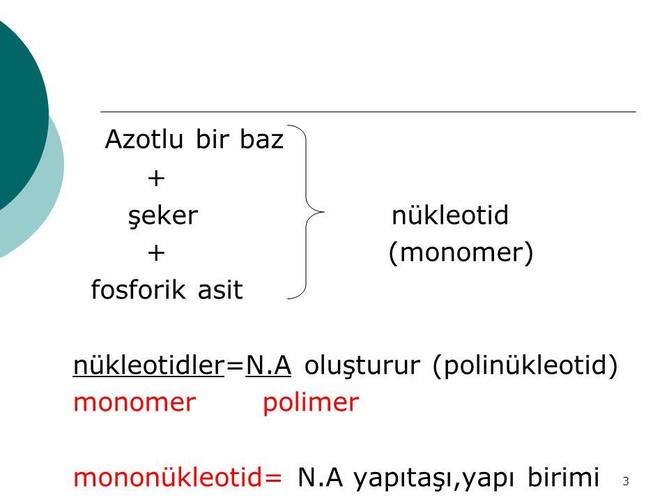 Azotlu bir baz + şeker nükleotid + (monomer) fosforik asit
