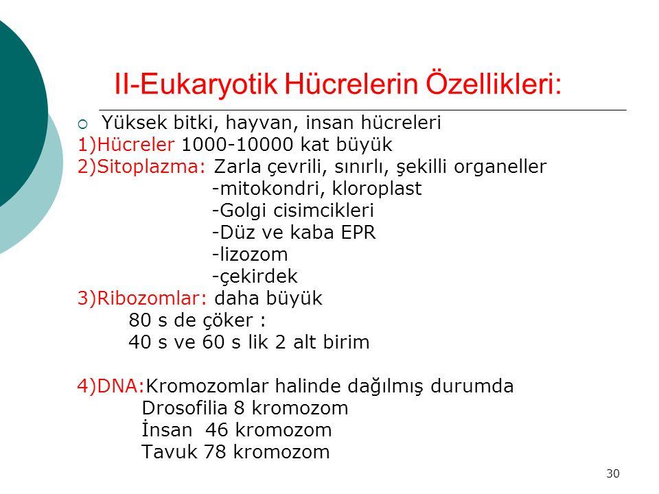 II-Eukaryotik Hücrelerin Özellikleri: