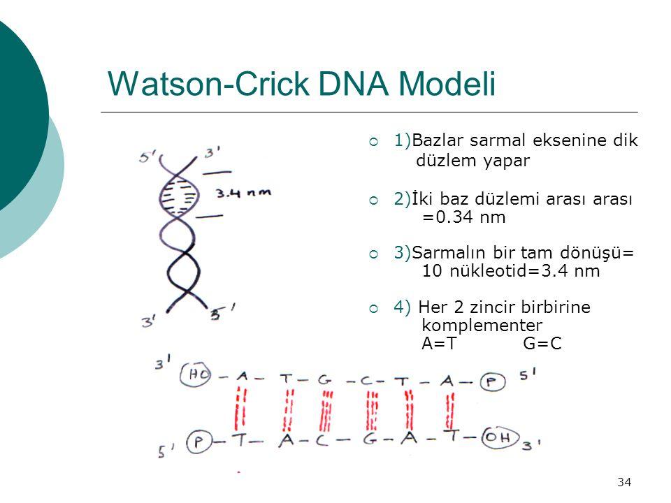 Watson-Crick DNA Modeli