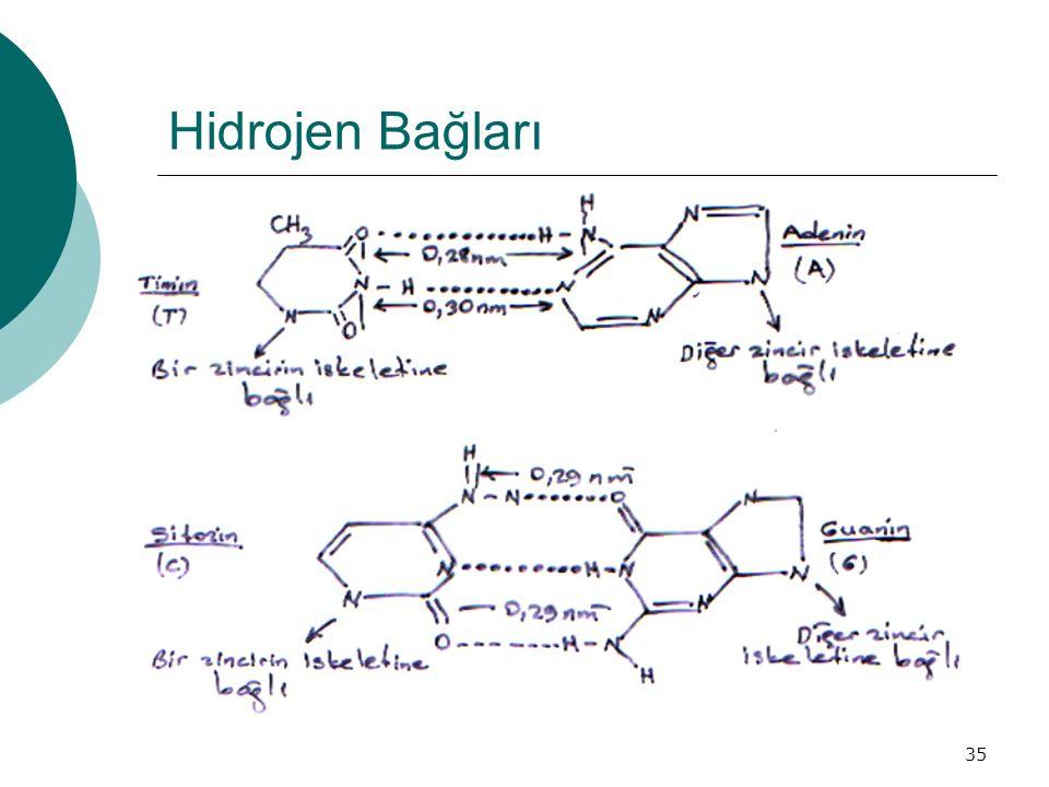 Hidrojen Bağları