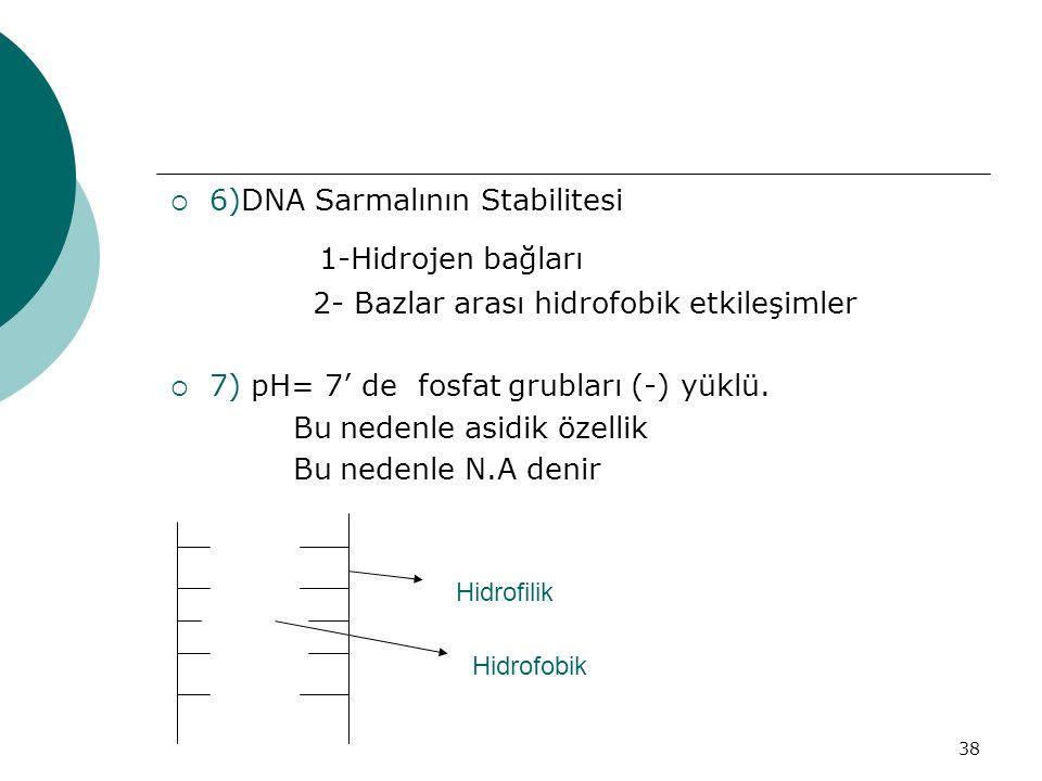 1-Hidrojen bağları 6)DNA Sarmalının Stabilitesi