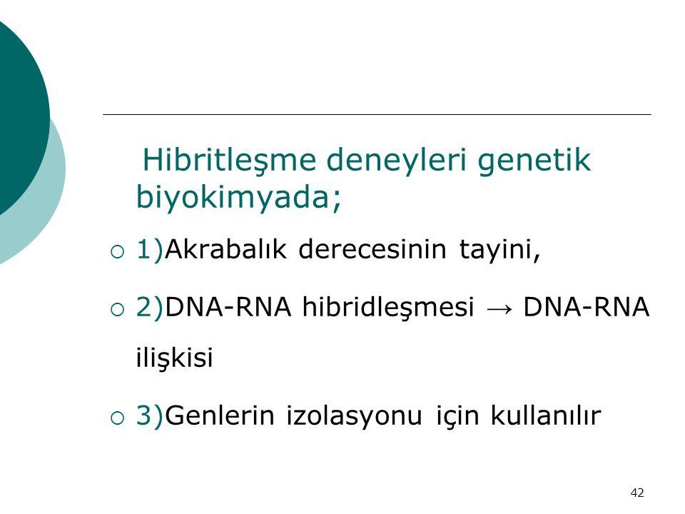 Hibritleşme deneyleri genetik biyokimyada;