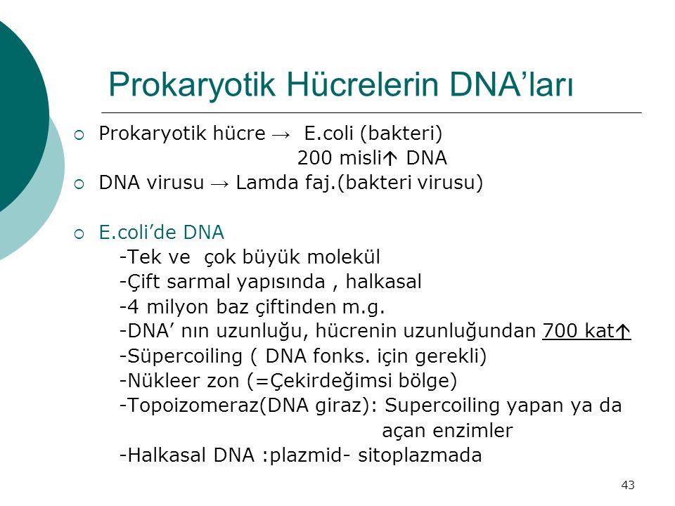 Prokaryotik Hücrelerin DNA'ları