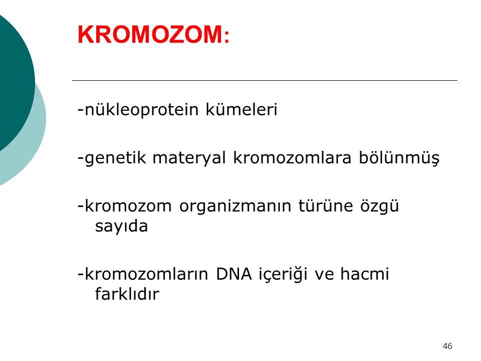KROMOZOM: -nükleoprotein kümeleri