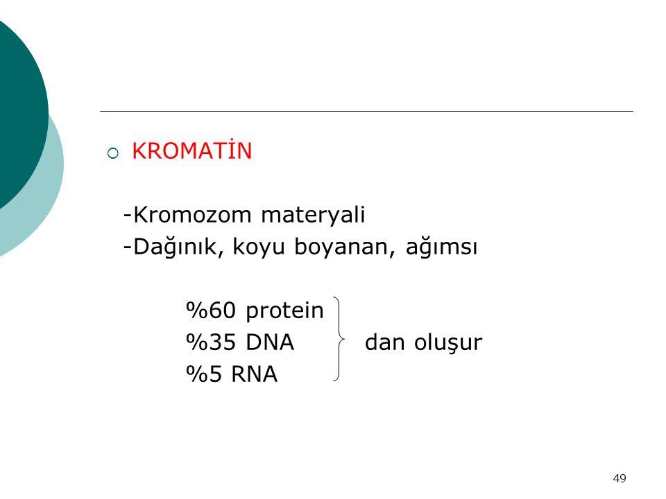 KROMATİN -Kromozom materyali. -Dağınık, koyu boyanan, ağımsı. %60 protein. %35 DNA dan oluşur.
