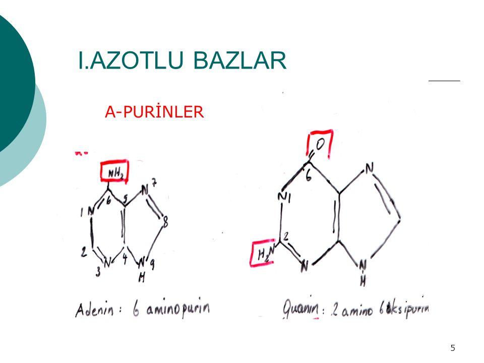 I.AZOTLU BAZLAR A-PURİNLER a.PURİNLER