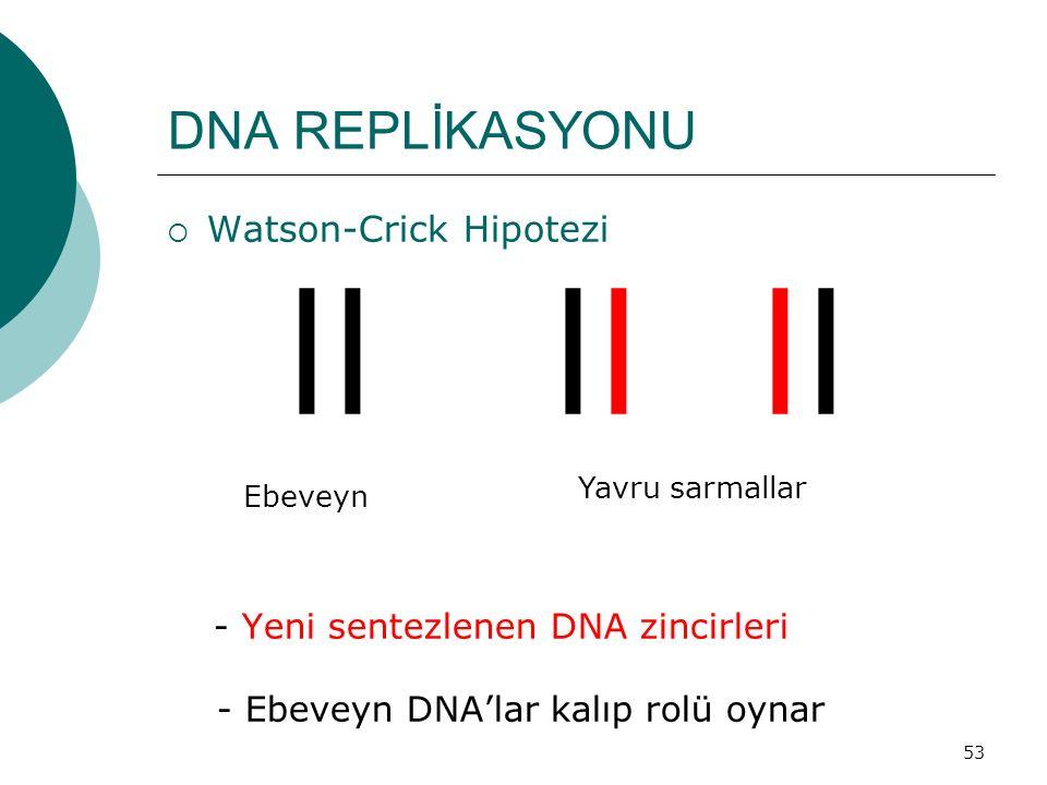 ll ll ll DNA REPLİKASYONU Watson-Crick Hipotezi