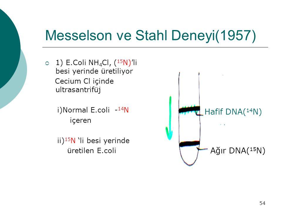Messelson ve Stahl Deneyi(1957)