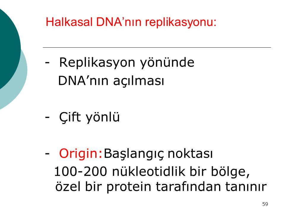 Halkasal DNA'nın replikasyonu: