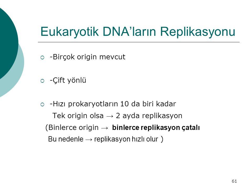 Eukaryotik DNA'ların Replikasyonu