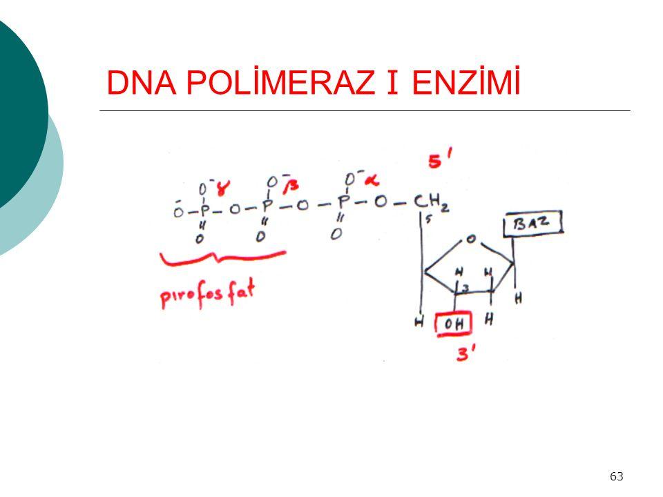 DNA POLİMERAZ I ENZİMİ