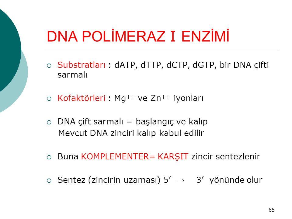 DNA POLİMERAZ I ENZİMİ Substratları : dATP, dTTP, dCTP, dGTP, bir DNA çifti sarmalı. Kofaktörleri : Mg++ ve Zn++ iyonları.