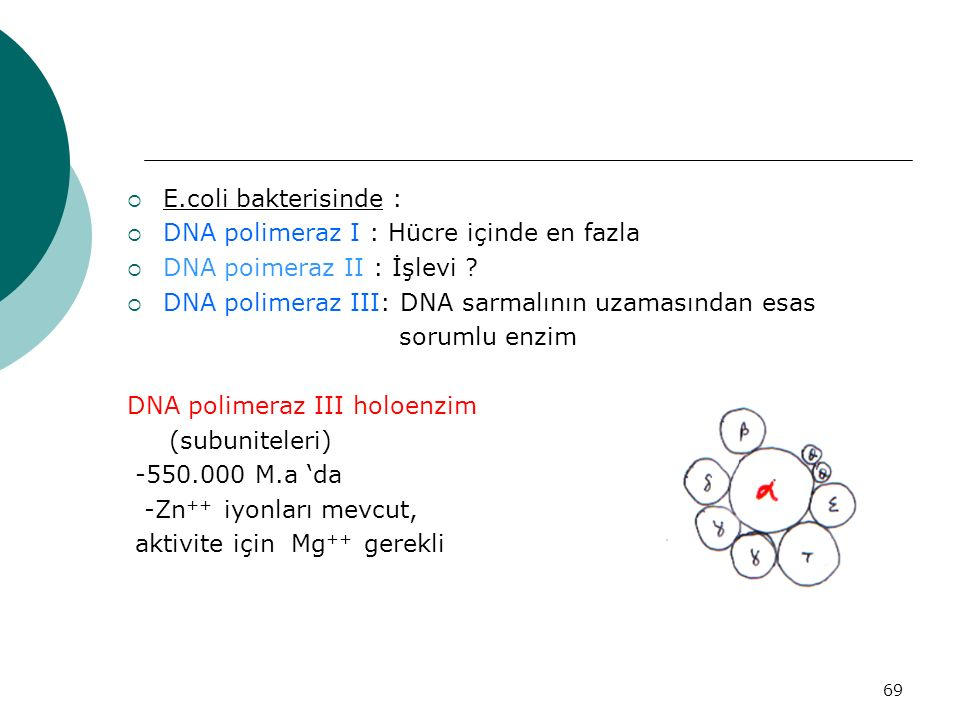E.coli bakterisinde : DNA polimeraz I : Hücre içinde en fazla. DNA poimeraz II : İşlevi DNA polimeraz III: DNA sarmalının uzamasından esas.