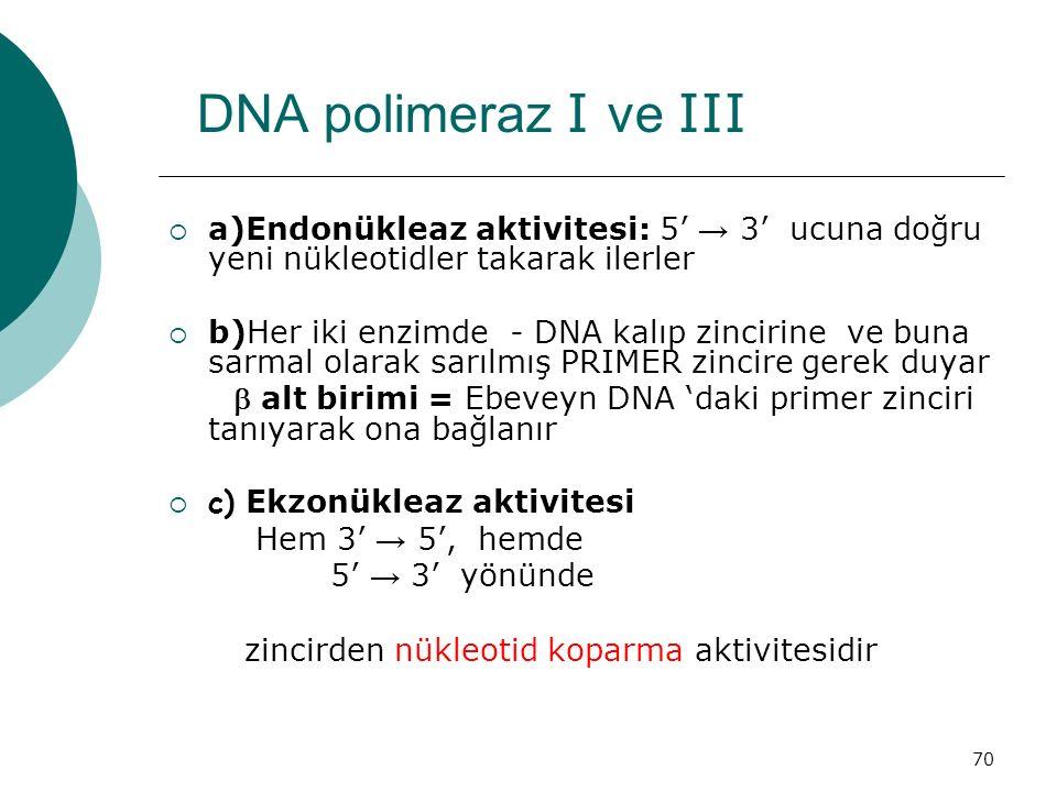DNA polimeraz I ve III a)Endonükleaz aktivitesi: 5' → 3' ucuna doğru yeni nükleotidler takarak ilerler.