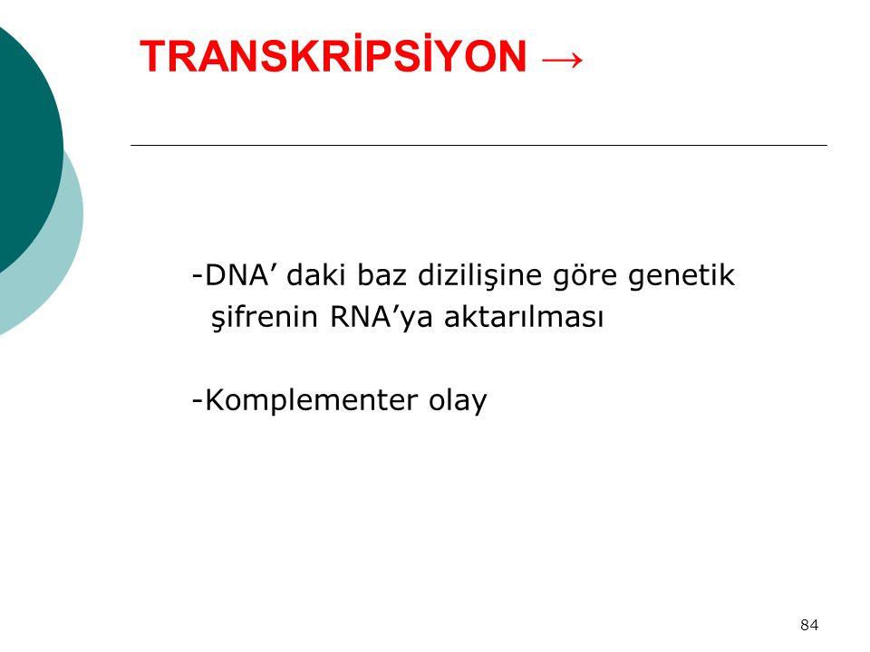 TRANSKRİPSİYON → -DNA' daki baz dizilişine göre genetik